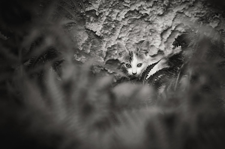 fotografia zwierzęta